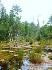 South Jersey's Pinelands.