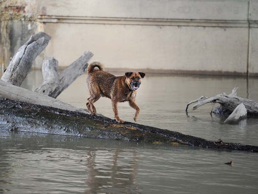 Indianapolis Fire Department workers rescued a dog named Adam that was stranded on a log jam in the middle of White River under the 16th Street bridge Sunday April 13, 2014.