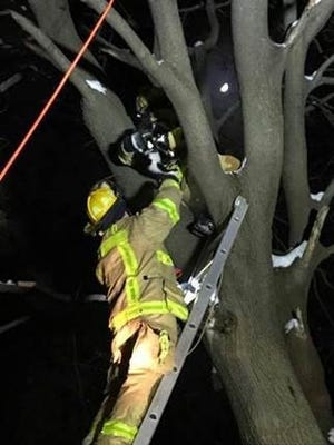 Firefighters rescue a cat that was stuck in a tree for a day and half at 2779 W. Wattles Road in Troy on Dec. 26, 2017.