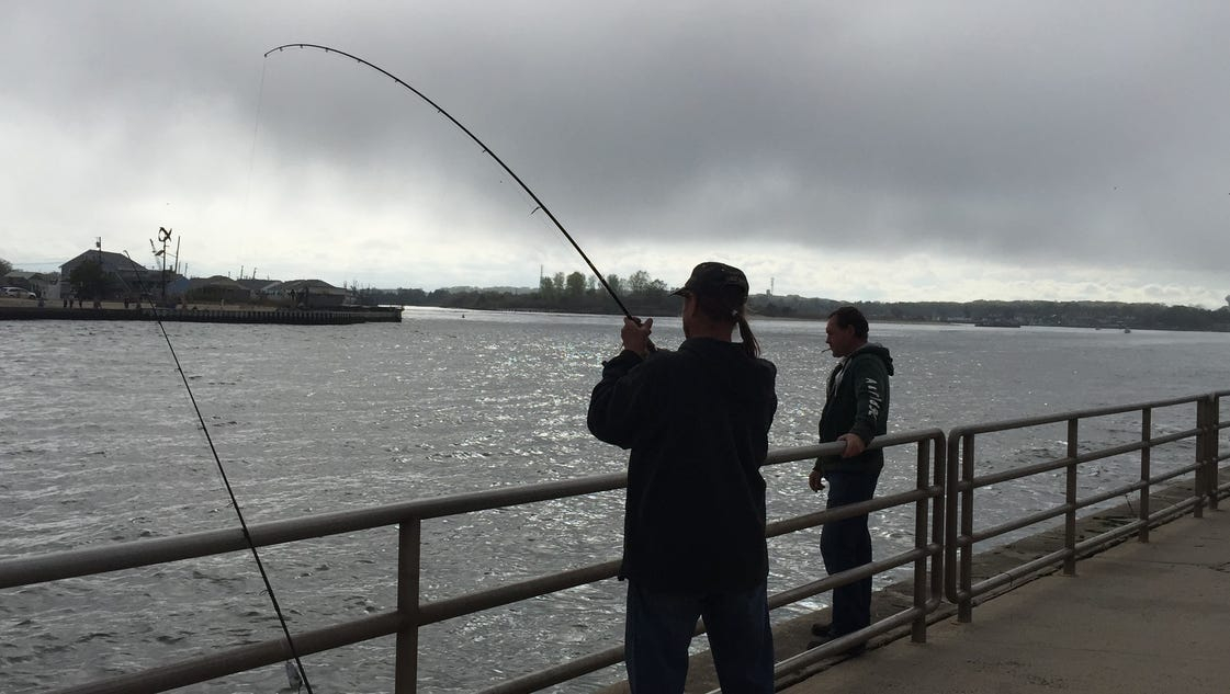 More wild bluefish action for Manasquan inlet fishing