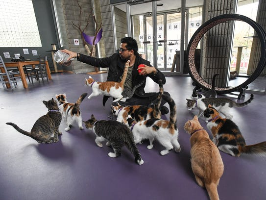 The Organic Cat Cafe co-owner Ernesto Cardenas plays