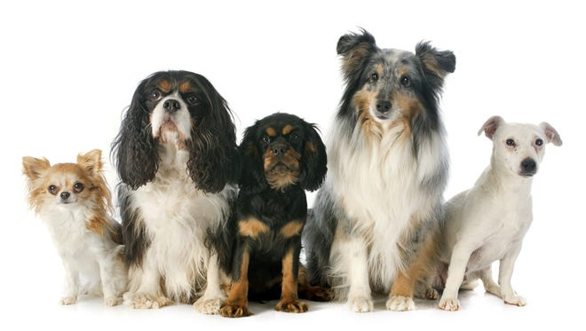 Indio City Council approved an ordinance banning the retail sales of dogs and cats on April 6.