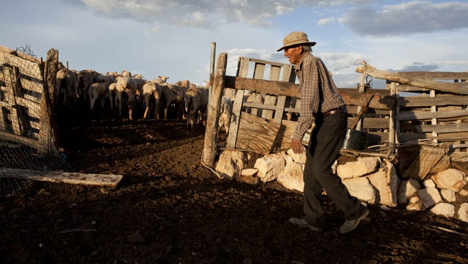 Henry Lane was one of the last remaining Navajos still herding sheep, the reservation's centuries-old pastoral way of life. Lane lived in the family's sheep camp located in Bodaway, more than 40 miles from the nearest town of Tuba City.