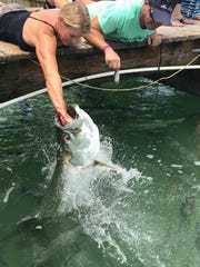 Feeding the tarpon at Robbie's in Islamorada.