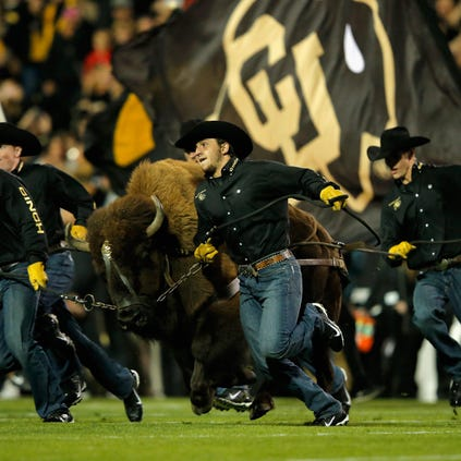 BOULDER, CO - SEPTEMBER 13:  Ralphie V the mascot of the Colorado Buffaloes takes the field before facing the Arizona State Sun Devils at Folsom Field on September 13, 2014 in Boulder, Colorado.