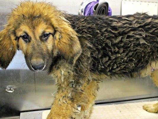 636015024233952932-rescued-dog.jpg