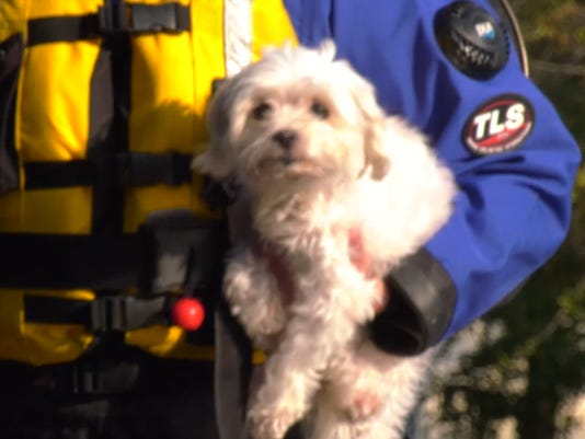 Rescuers kick in door to save to stranded dog