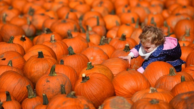 It's Fall Festival time at Country Pumpkins in Dry Ridge.