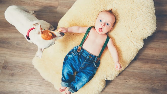You love your dog, but should he stick around when your little bundle of joy arrives?