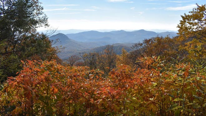 The view of the fall colors by the Log Hollow Overlook on the Blue Ridge Parkway on in 2018.