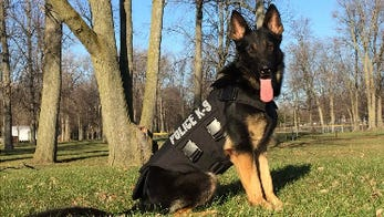 Azar is one of two Wyoming K9s who received protective vests from Vested Interest in K9s, Inc.