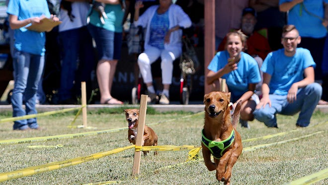 Belle (right) and Charlie compete in the championship round of the dog races at the second annual Slobberfest Saturday at the Humane Society of Wichita County.