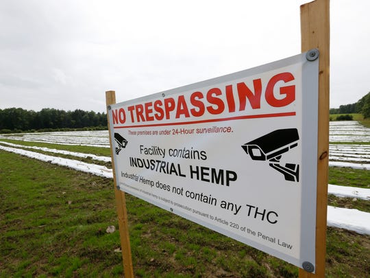 Signs warning of no trespassing and the fact that industrial hemp does not contain any THC at the site of the industrial hemp farm at Nanticoke Gardens in Endicott on Thursday.
