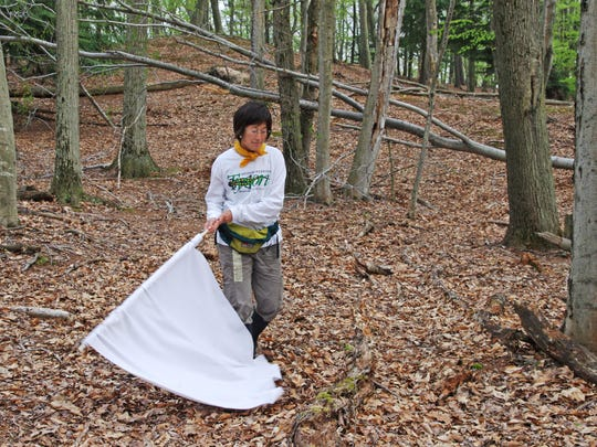 Michigan State University associate professor Jean Tsao drags a white, corduroy cloth along the forest floor in Ludington State Park in May 2010, searching for blacklegged ticks.