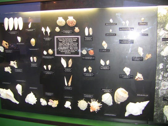 The Bailey-Matthews Shell Museum has colorful displays