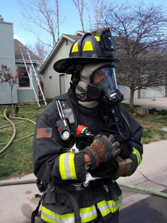 House Fire Rescue Cat Rescued From House Fire in