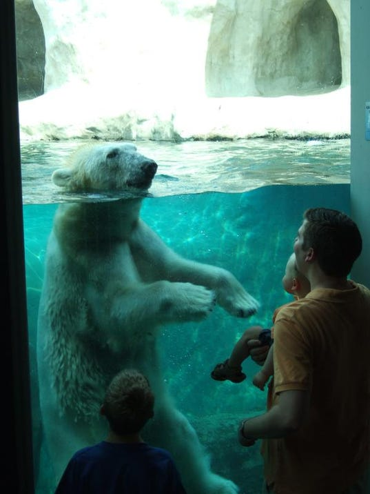 Toledo Zoo Polar Bear & family - Andi Norman.JPG