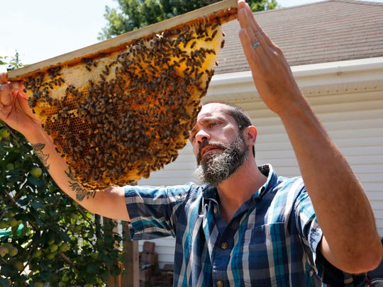 Ian Thompson checks a drawyer from his bee hive to