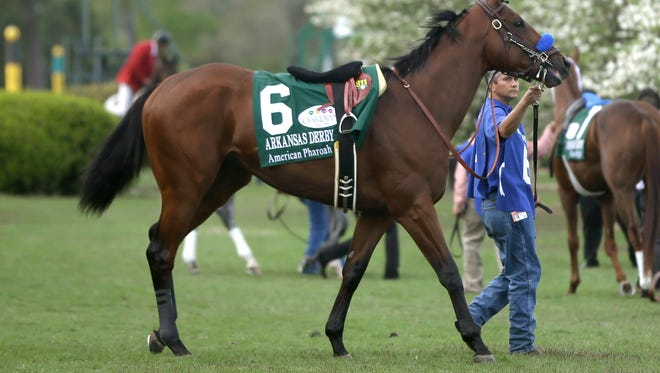 American Pharoah is led around the infield paddock at Oaklwan Park before romping in the Arkansas Derby on April 11.