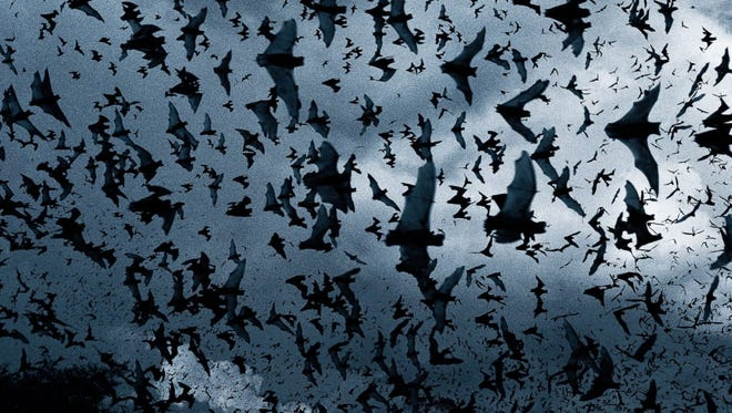 """""""Bats have received a bad rap and we're in danger of losing these valuable creatures."""" local wildlife biologist with the Smokey Bear Ranger District Larry Cordova said."""