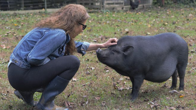 Sweet Bear Rescue Farm owner Lisa McDonald shows some love to Benjamin, a Vietnamese pot belly pig.