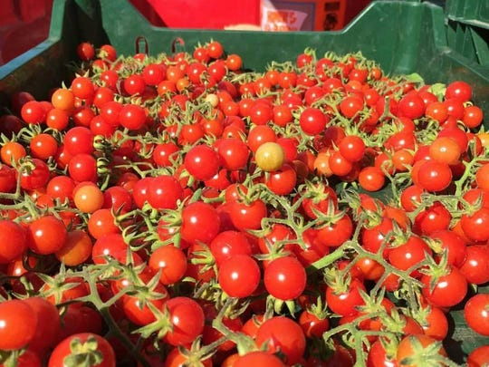 Tomatoes – such as these from Harvest Moon Organic Farm in Hillsborough – soon will blanket local farmers markets.