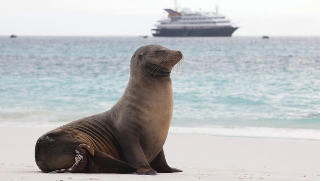 Sea Lion on Espanola Island & Silver Galapagos in background Travel - Visiting the Galapagos on the Silversea Cruises Silver Galapagos cruise ship.