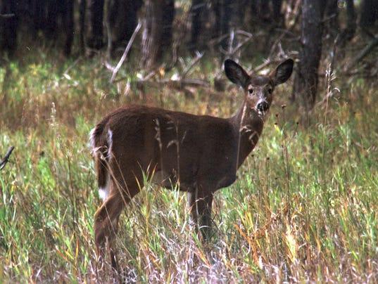 9/1 Deer