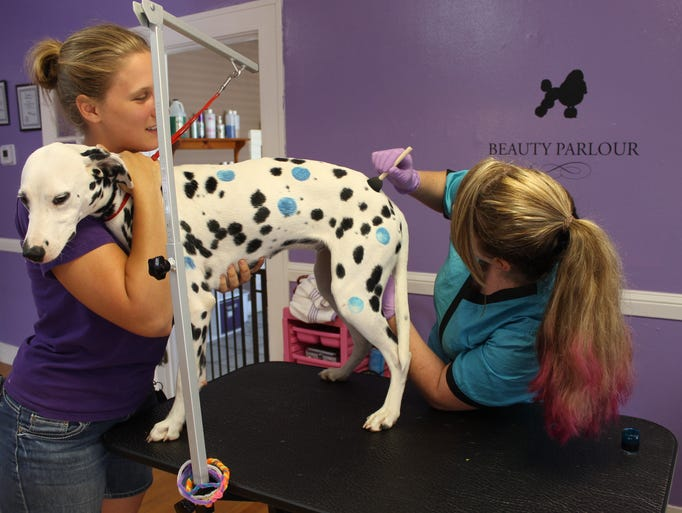 Scarlet Reynolds hold Dally the Dalmatian while Erica Conway uses a sponge brush to apply colorful polka dots.