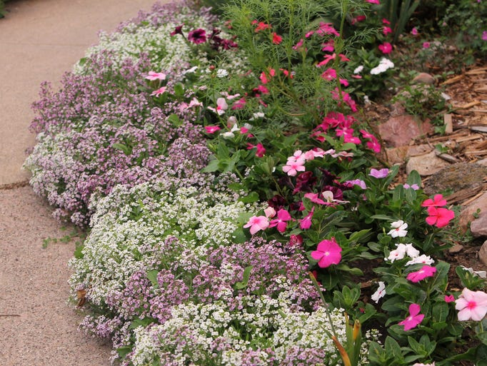 Annuals near kitchen driveway - alyssum likes it there.