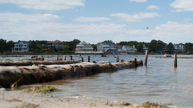 A living shoreline has been created in Bethany Beach using pine logs and coconut fiber.