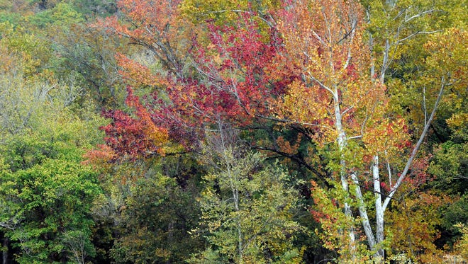 Fall colors near their peak in the Twin Lakes Area.