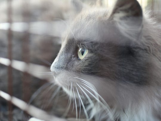 Advocates of trap-neuter-release programs say they