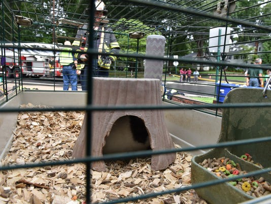 Guinea pig is safe after classroom fire