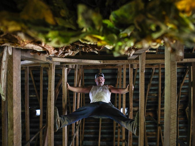 Justin Pruitt stands on beams high up in a tobacco