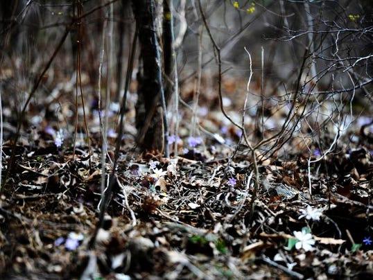 wildflowers_005.JPG
