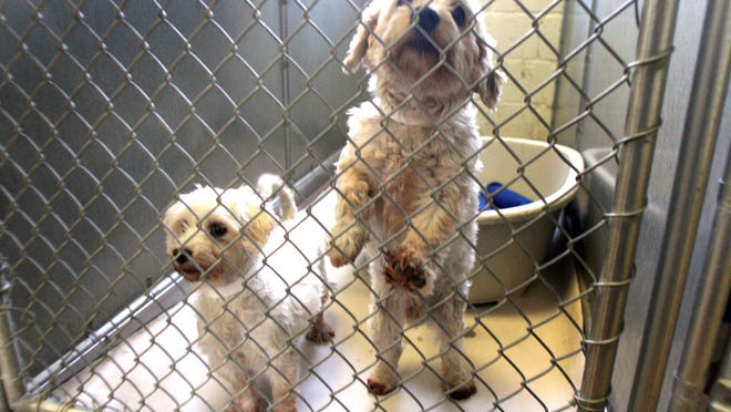 New York is considering a law that would ban pet stores from selling puppies from puppy mills.