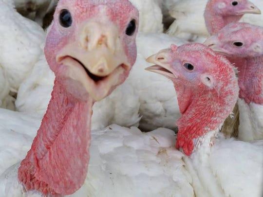 Lee Turkey Farm.