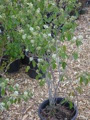 -KEW 0523 Native plants 3.jpg_20150520.jpg