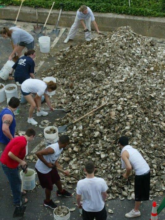 oyster 8.jpg