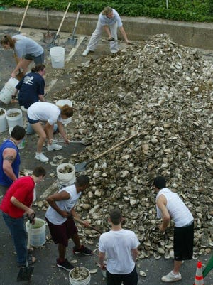 Plant shells the NY/NJ Baykeeper had usesd to culivate an oyster bed in the Navesink River, Red Bank in 2003 before the ban. The reef has since been removed.