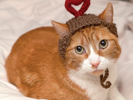 Crafts-Cats in Hats_Marq.jpg