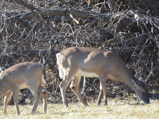 Deer hunting just became more complicated in most of Franklin County with the expansion of the area meant to manage chronic wasting disease.