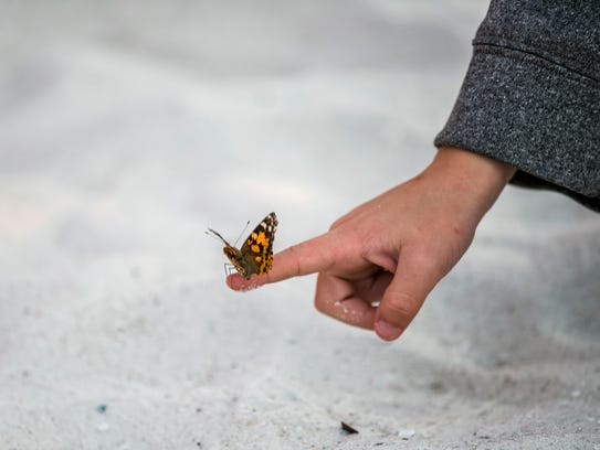 Butterflies are released to honor the Collier County
