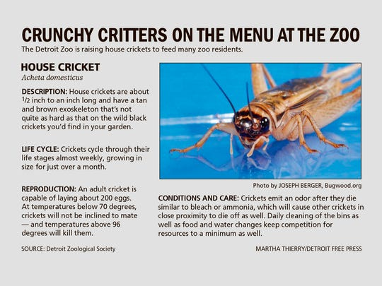 The Detroit Zoo is raising crickets to feed many zoo residents.