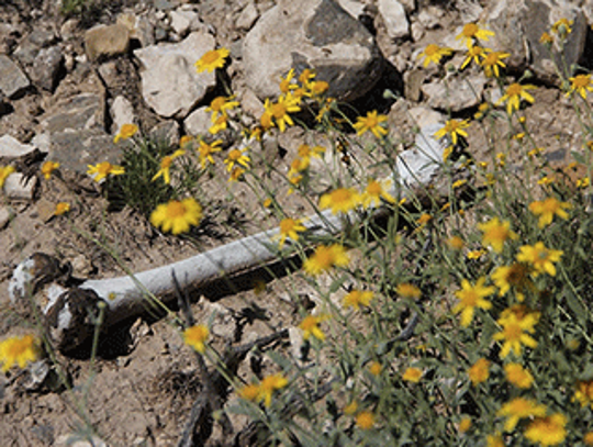 The search at the Navajo Arroyo was conducted at the
