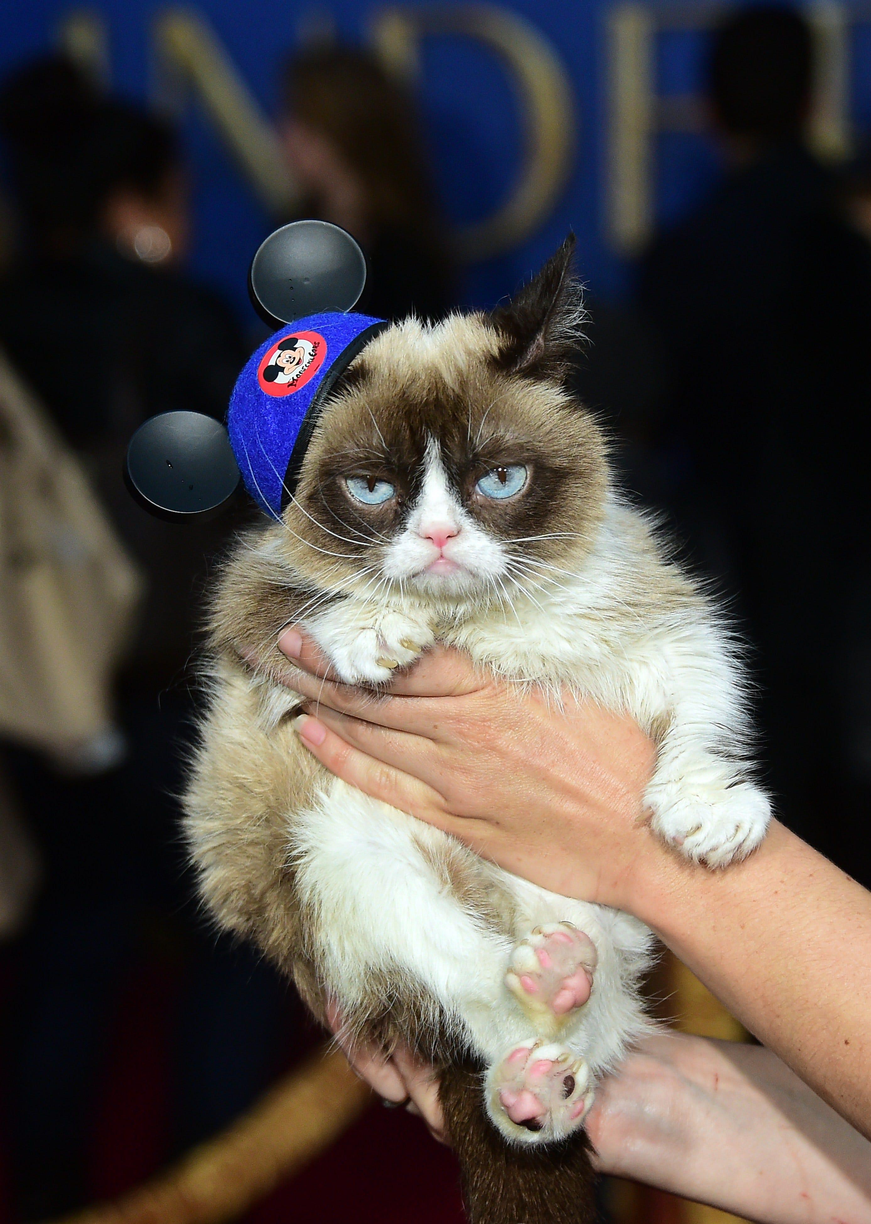 Grumpy Cat wins 710,000 in copyright lawsuit against Grenade Beverage forecasting