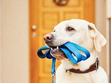 CVAS sponsors 16th annual dog walk