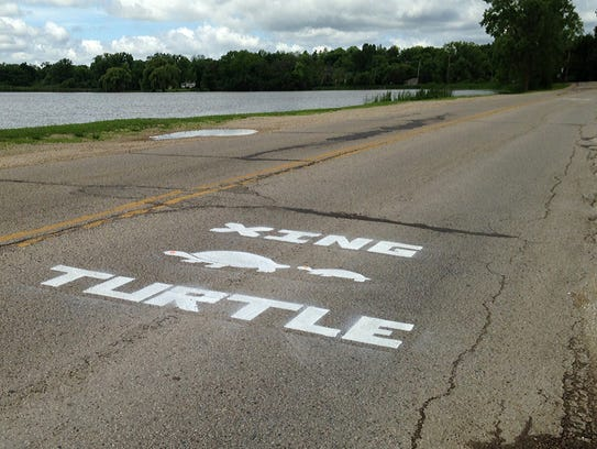 Painted silhouettes on roads warn drivers of turtle