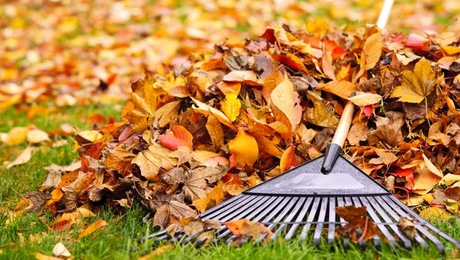 The first step is to clean up any leftover leaves on the ground.